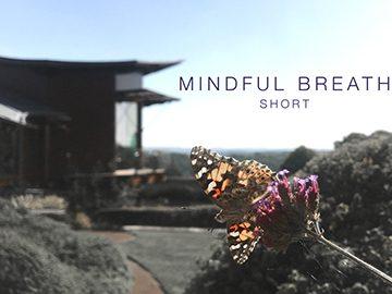 Mindful Breath (Short)